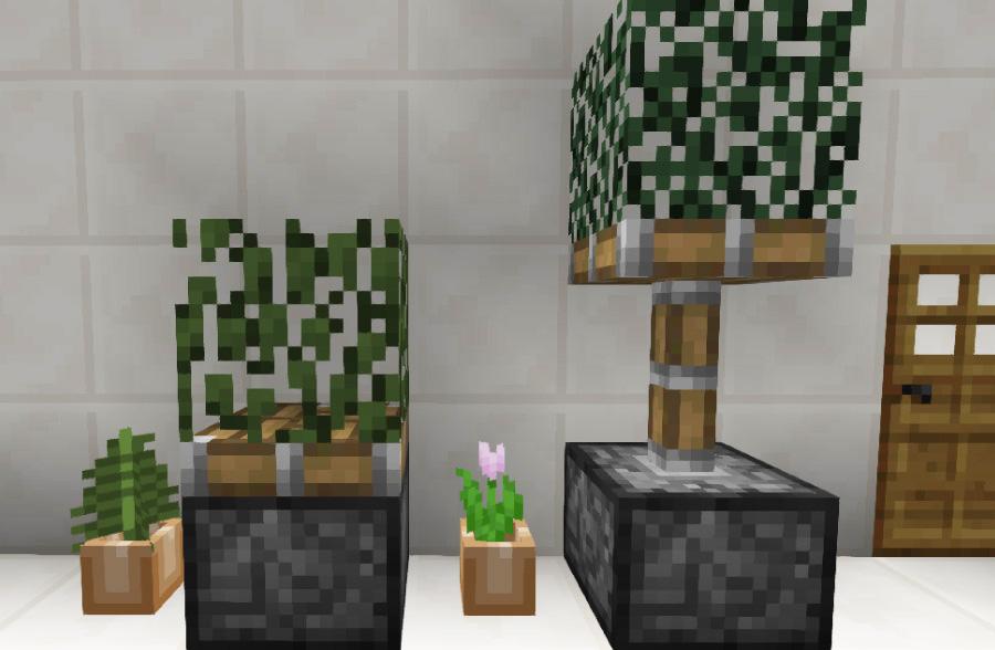 ピストン式観葉植物①