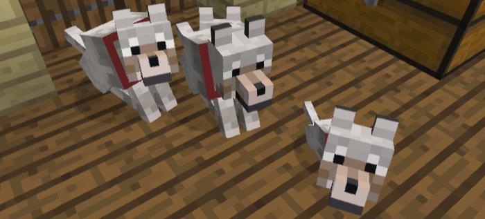 手懐けられたオオカミ3匹
