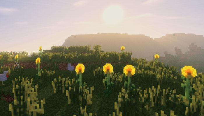 ひまわり平原-Sunflower Plains