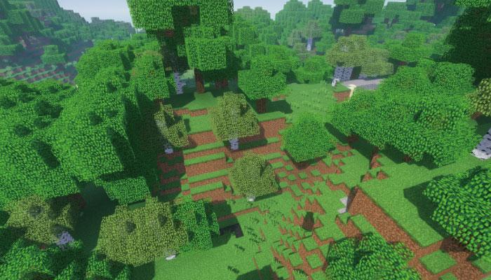 森林-Forest