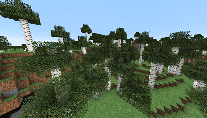 高いシラカバの森バイオーム