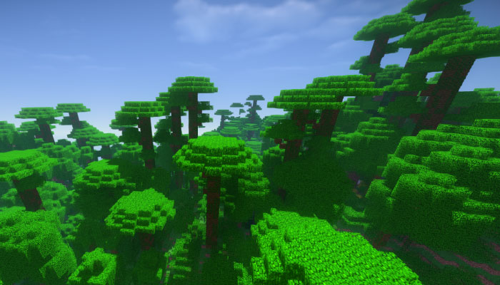 ジャングル M-Jungle M