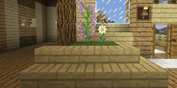 観葉植物を設置