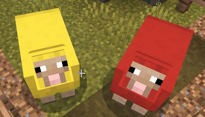 色の違う2匹の羊