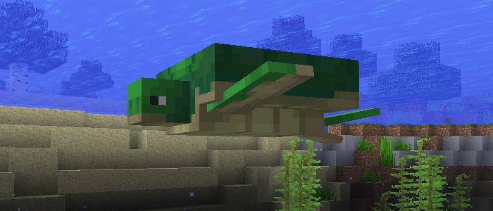 カメが泳ぐ姿
