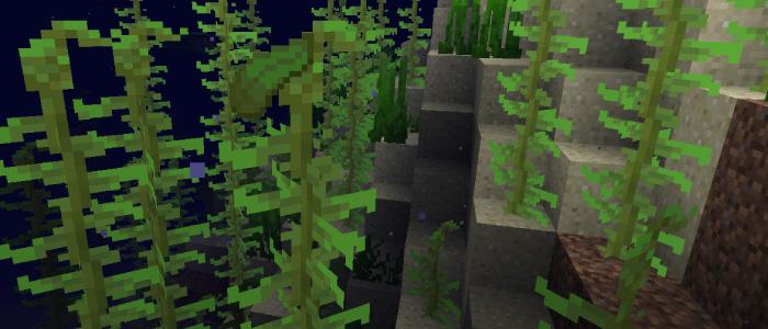 海に生息する海藻