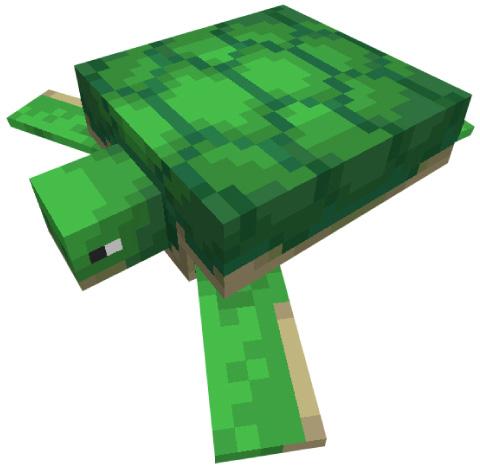 カメ(turtle)