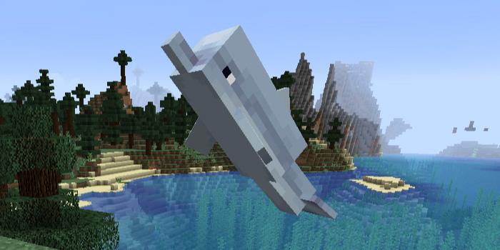 イルカが脱走