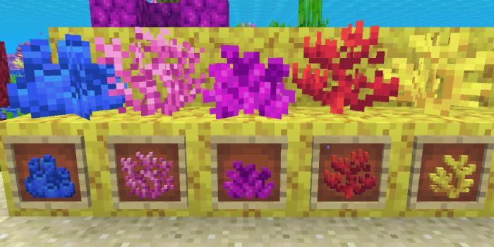 軟質サンゴ