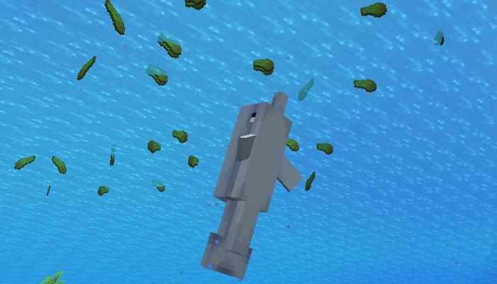 イルカが昆布で遊ぶ様子