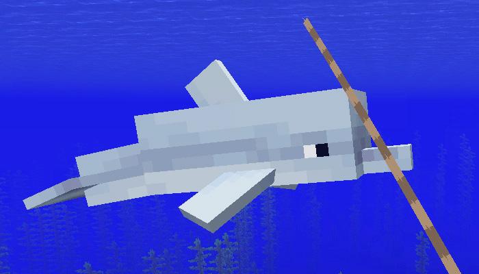 イルカをリードで連れて行く様子