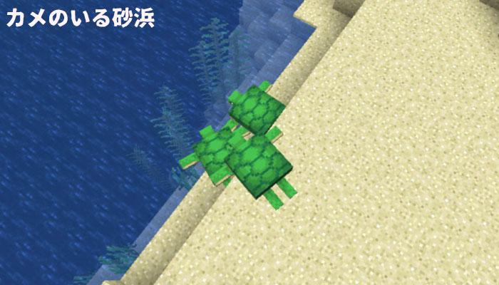 カメのいる砂浜