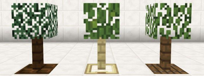 シンプルな観葉植物