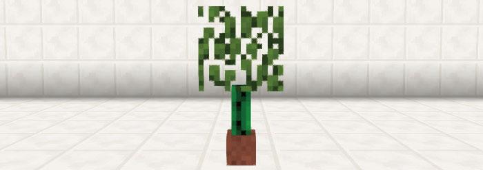 サボテン式観葉植物