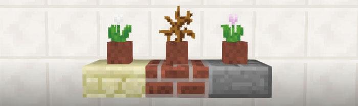 壁に飾る観葉植物