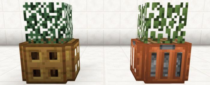 簡単・観葉植物