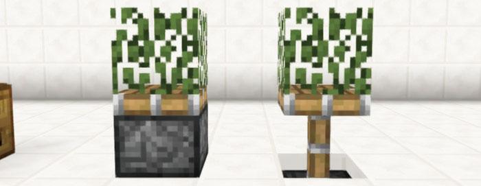 ピストン式観葉植物