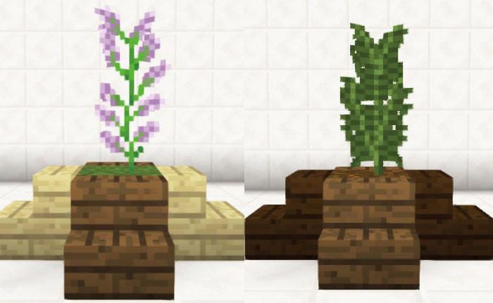 オブジェ的観葉植物