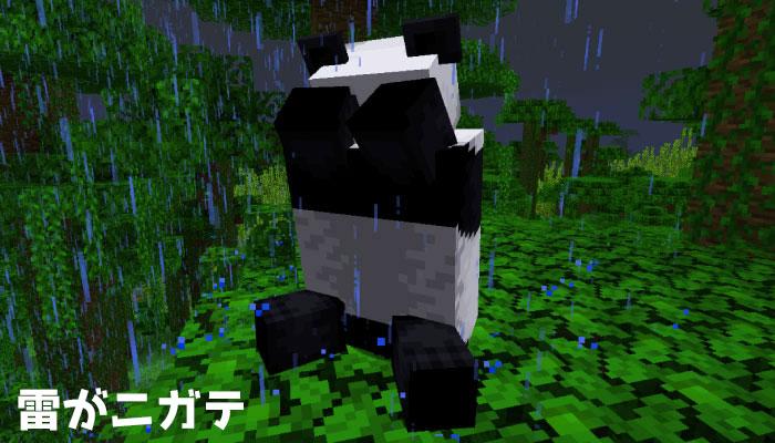 雷雨を怖がるパンダ