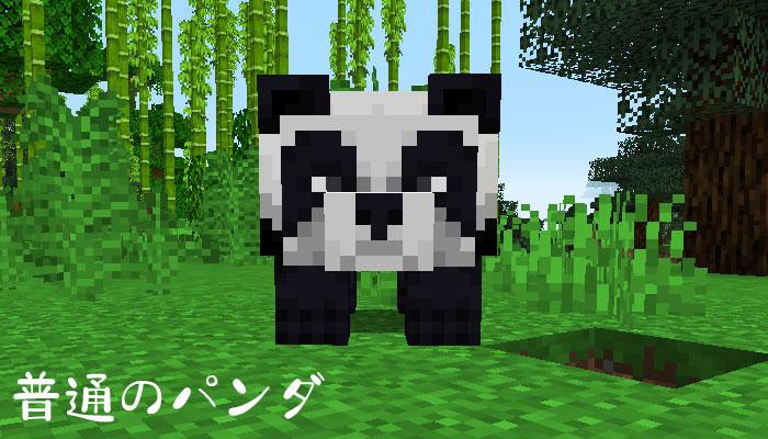 普通のパンダ