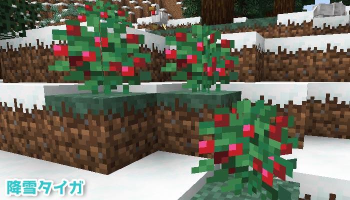降雪タイガに生えるスイートベリー