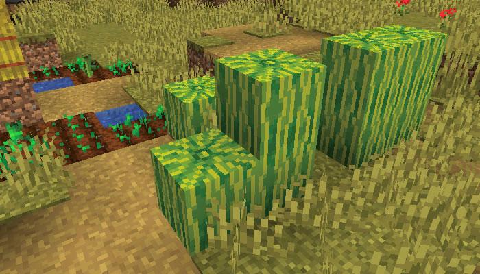 新しいサバンナの村の畑