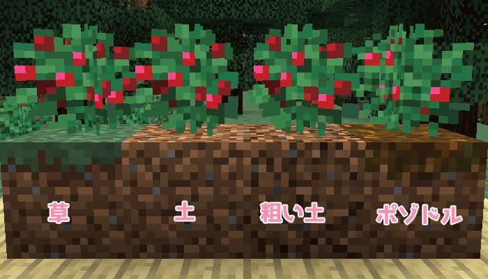 スイートベリーの植えられるブロック