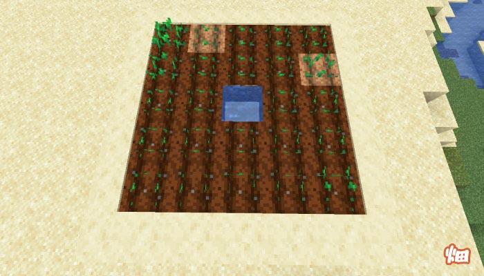 砂漠の村の畑