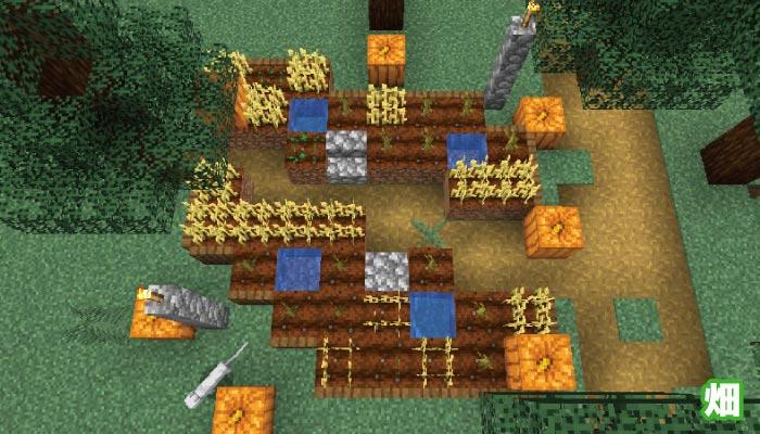 新しいタイガの村の畑