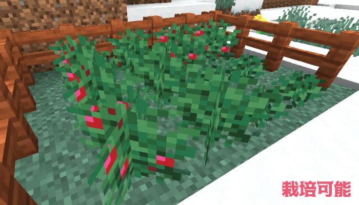 スイートベリーの栽培