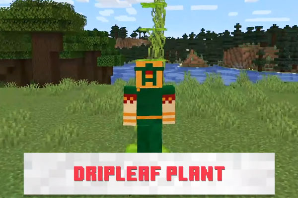 新ブロックDripleafplant