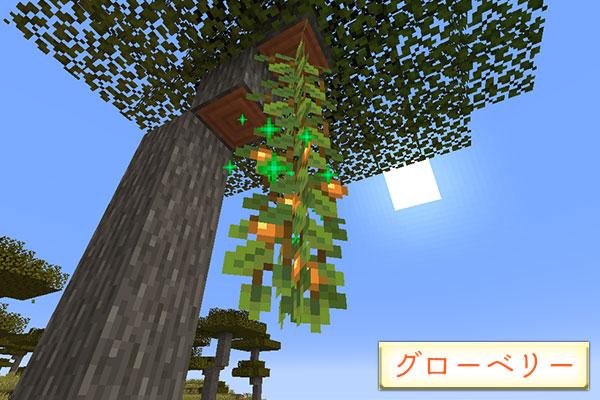 グローベリーの栽培