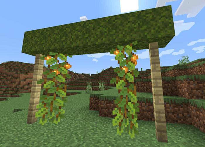 地上でのグロウベリー栽培