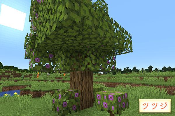ツツジの木や苗木