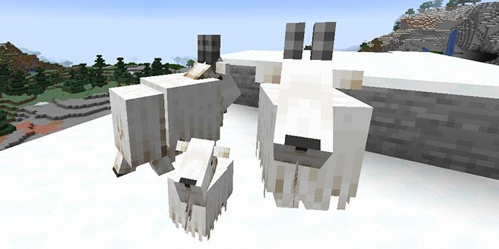 ヤギの繁殖
